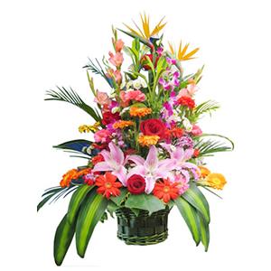 鲜花/深深祝福:红玫瑰、粉百合、橘色太阳花、红色太阳花、红色和粉色康